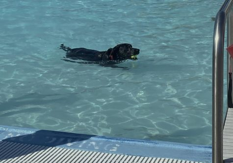 A black lab splashes in the shallow end of Nixas community pool